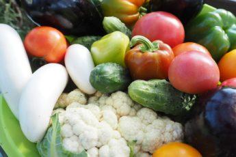 вегетарианство и веганство отличия